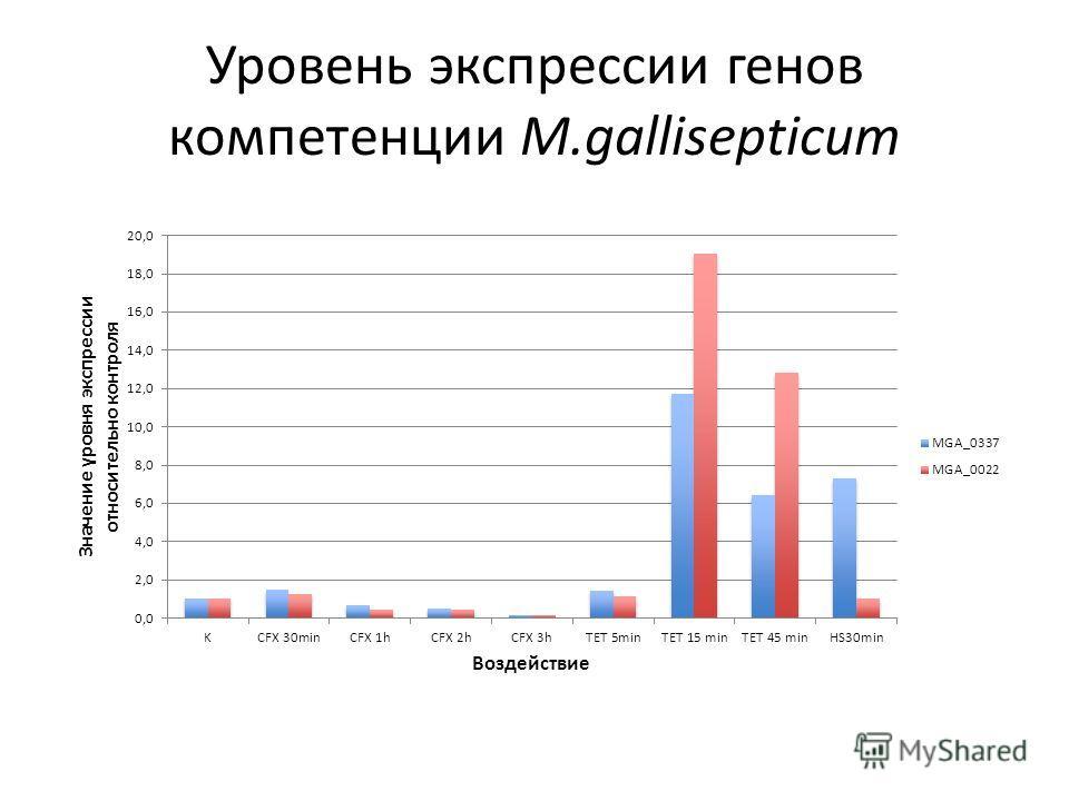 Уровень экспрессии генов компетенции M.gallisepticum