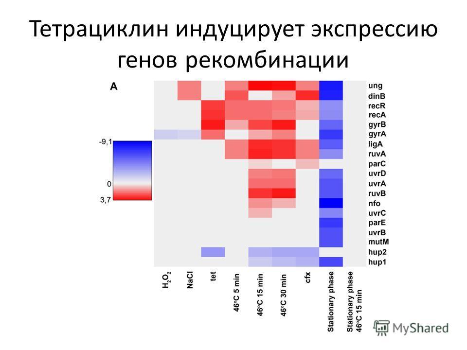 Тетрациклин индуцирует экспрессию генов рекомбинации