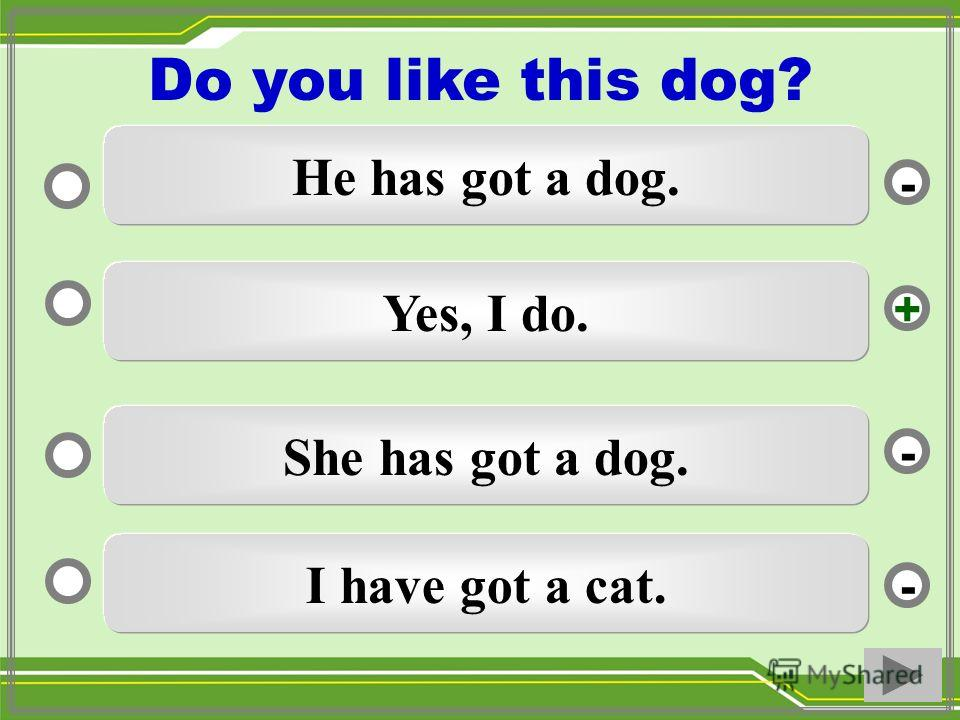 Yes, I do. She has got a dog. I have got a cat. He has got a dog. - - + - Do you like this dog?