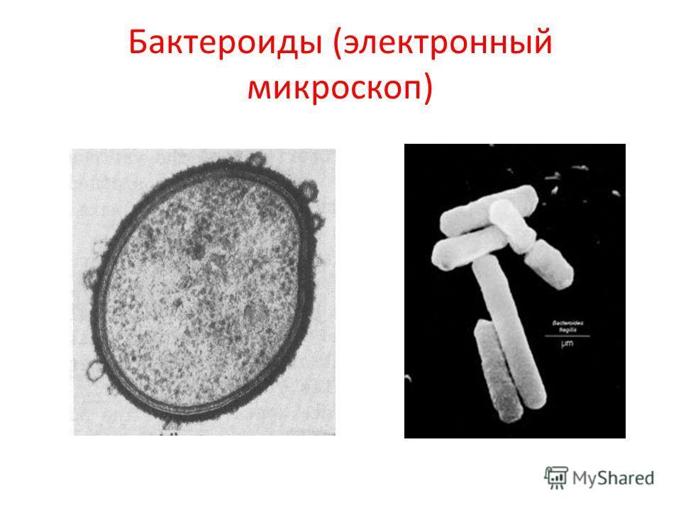 Бактероиды (электронный микроскоп)