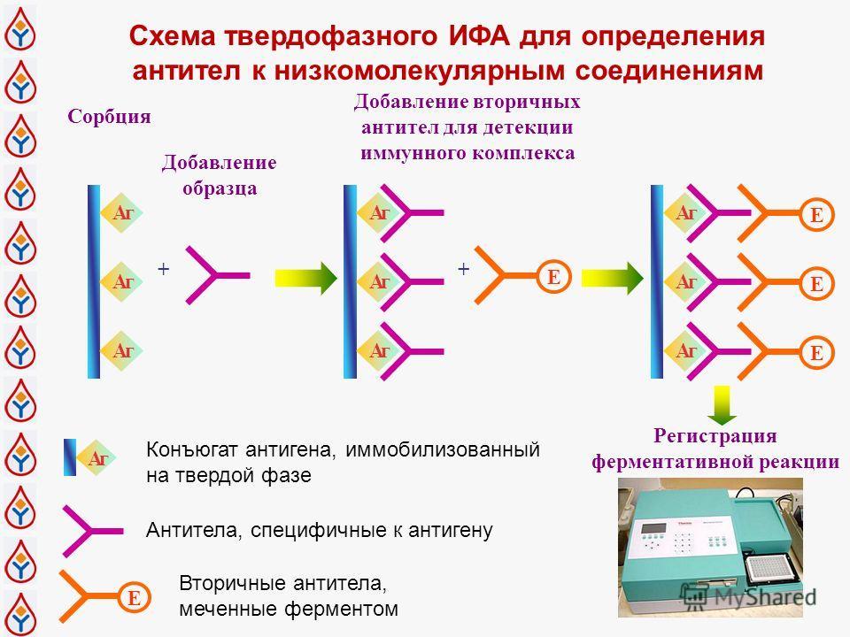 Схема твердофазного ИФА для определения антител к низкомолекулярным соединениям Регистрация ферментативной реакции Добавление вторичных антител для детекции иммунного комплекса + Сорбция Добавление образца Aг Aг Aг E Aг Aг Aг + E E E Aг Aг Aг E Aг Ко