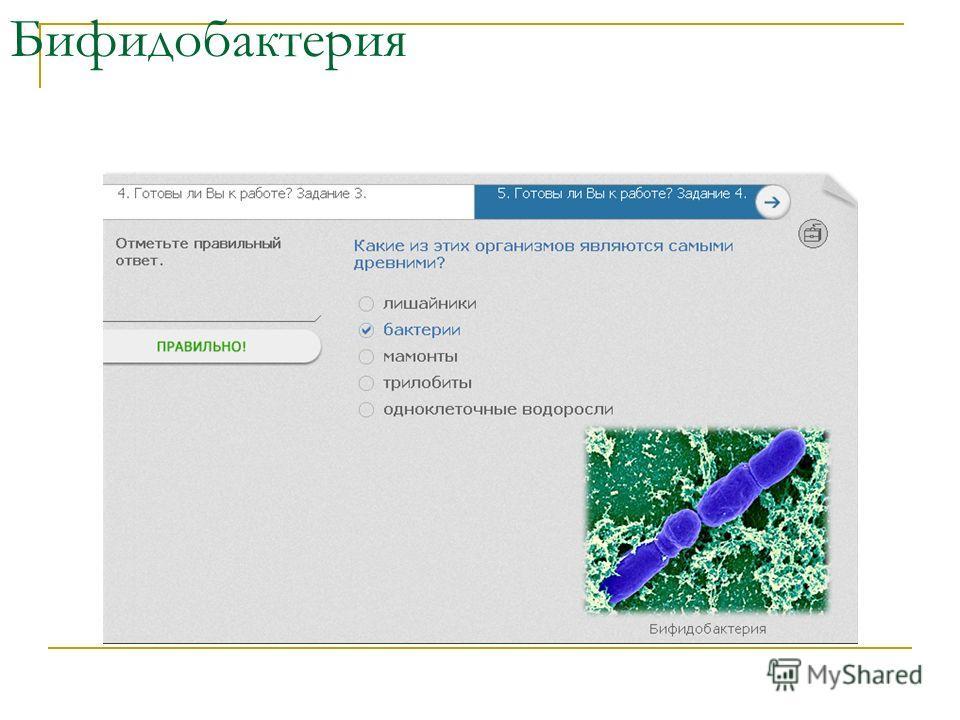 Бифидобактерия