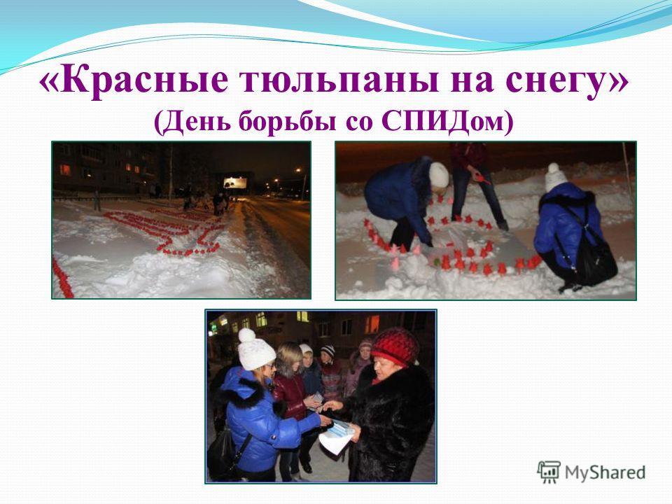 «Красные тюльпаны на снегу» (День борьбы со СПИДом)