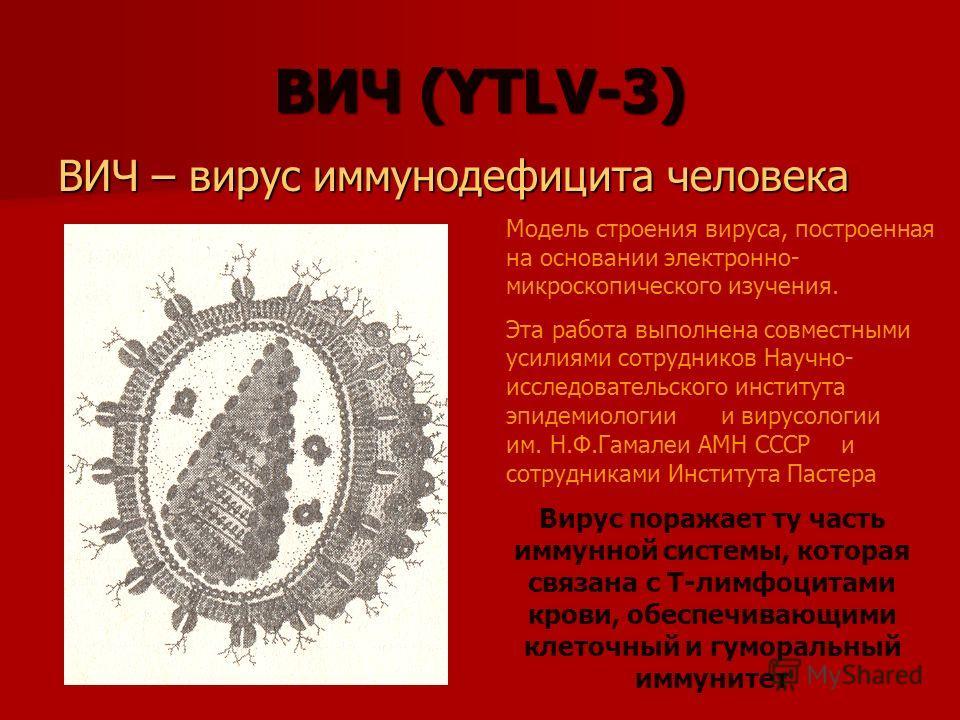 ВИЧ (YTLV-3) ВИЧ – вирус иммунодефицита человека Модель строения вируса, построенная на основании электронно- микроскопического изучения. Эта работа выполнена совместными усилиями сотрудников Научно- исследовательского института эпидемиологии и вирус