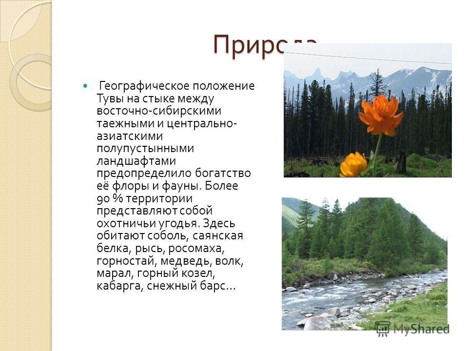 Природа Географическое положение Тувы на стыке между восточно - сибирскими таежными и центрально - азиатскими полупустынными ландшафтами предопределило богатство её флоры и фауны. Более 90 % территории представляют собой охотничьи угодья. Здесь обита