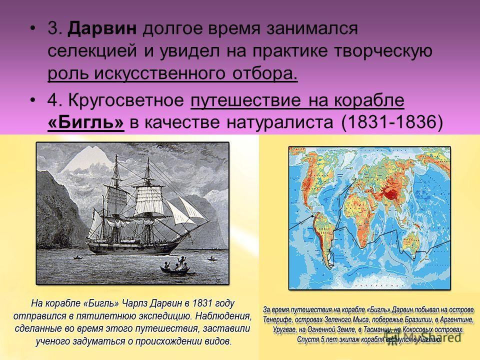 3. Дарвин долгое время занимался селекцией и увидел на практике творческую роль искусственного отбора. 4. Кругосветное путешествие на корабле «Бигль» в качестве натуралиста (1831-1836)