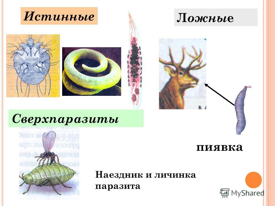 Истинные Л ожны е Сверхпаразиты пиявка Наездник и личинка паразита