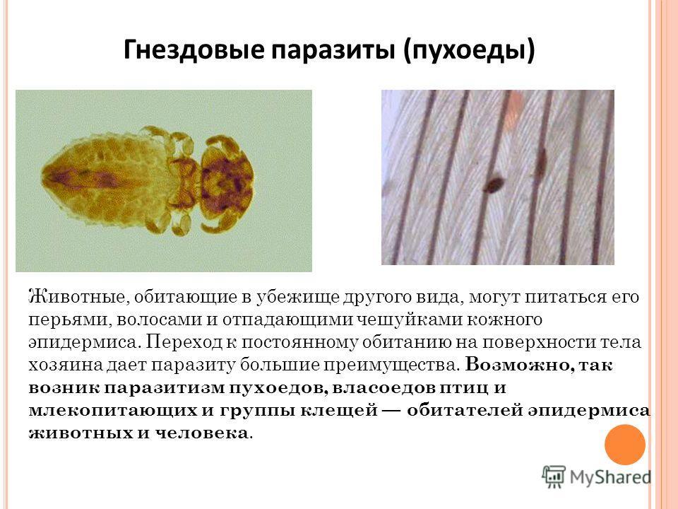 Животные, обитающие в убежище другого вида, могут питаться его перьями, волосами и отпадающими чешуйками кожного эпидермиса. Переход к постоянному обитанию на поверхности тела хозяина дает паразиту большие преимущества. Возможно, так возник паразитиз