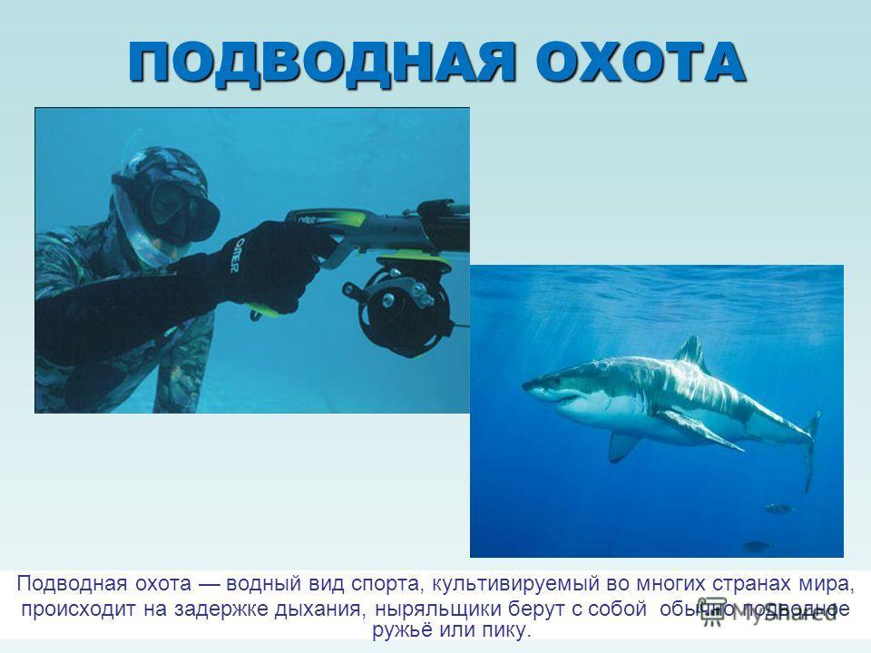 ПОДВОДНАЯ ОХОТА Подводная охота водный вид спорта, культивируемый во многих странах мира, происходит на задержке дыхания, ныряльщики берут с собой обычно подводное ружьё или пику.