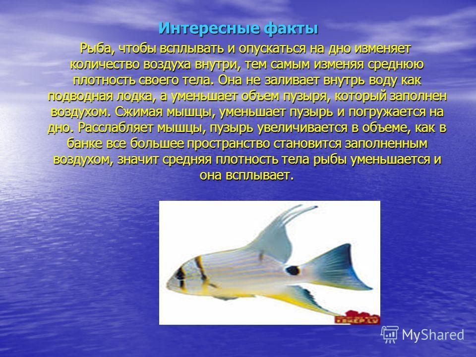 Интересные факты Рыба, чтобы всплывать и опускаться на дно изменяет количество воздуха внутри, тем самым изменяя среднюю плотность своего тела. Она не заливает внутрь воду как подводная лодка, а уменьшает объем пузыря, который заполнен воздухом. Сжим