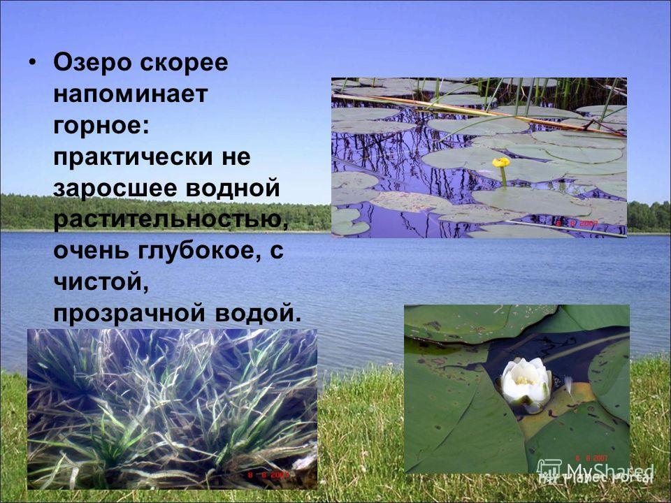 Озеро скорее напоминает горное: практически не заросшее водной растительностью, очень глубокое, с чистой, прозрачной водой.