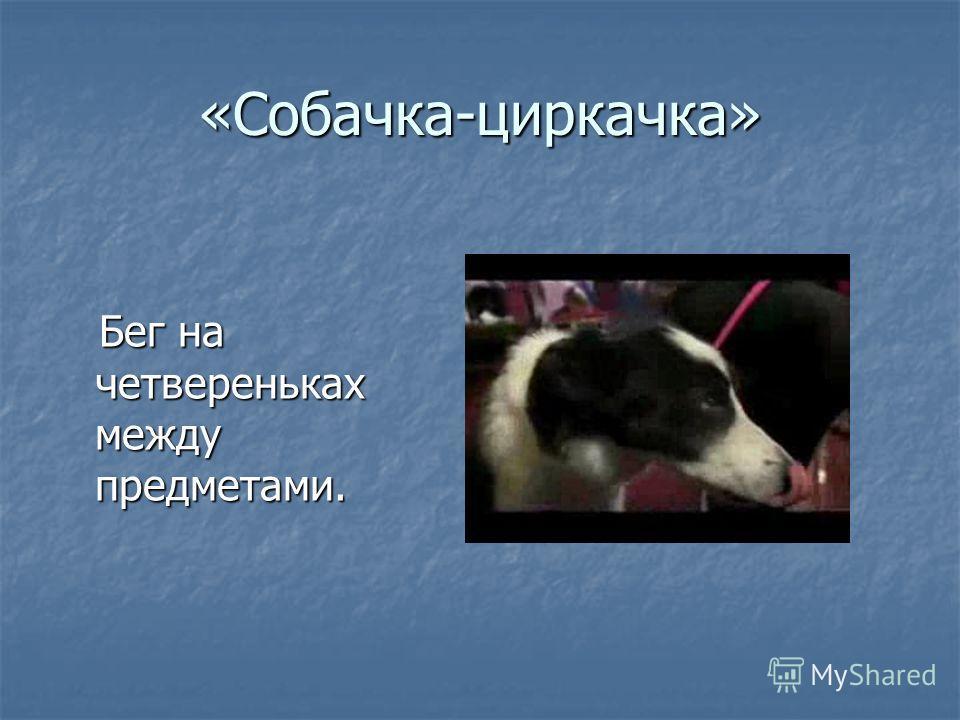 «Собачка-циркачка» Бег на четвереньках между предметами. Бег на четвереньках между предметами.