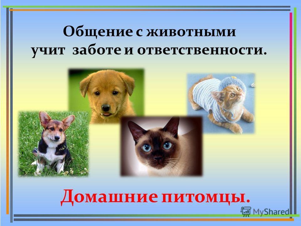 Домашние питомцы. Общение с животными учит заботе и ответственности.