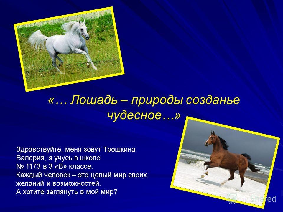 «… Лошадь – природы созданье чудесное…» Здравствуйте, меня зовут Трошкина Валерия, я учусь в школе 1173 в 3 «В» классе. Каждый человек – это целый мир своих желаний и возможностей. А хотите заглянуть в мой мир?