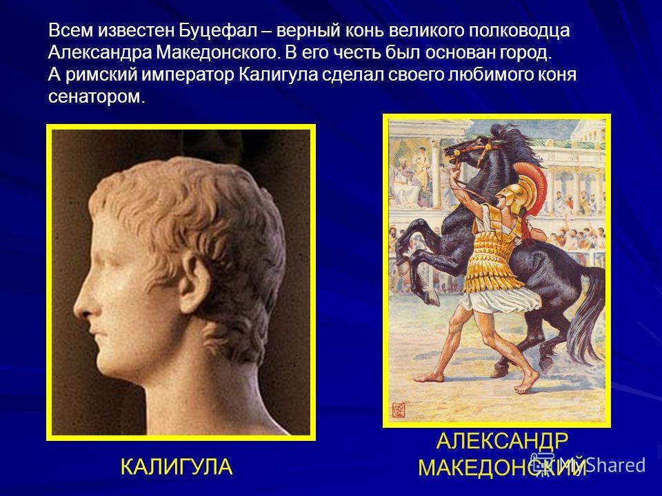 КАЛИГУЛА АЛЕКСАНДР МАКЕДОНСКИЙ Всем известен Буцефал – верный конь великого полководца Александра Македонского. В его честь был основан город. А римский император Калигула сделал своего любимого коня сенатором.