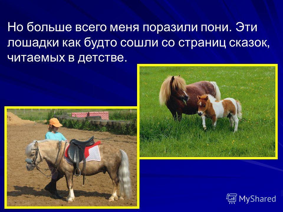 Но больше всего меня поразили пони. Эти лошадки как будто сошли со страниц сказок, читаемых в детстве.