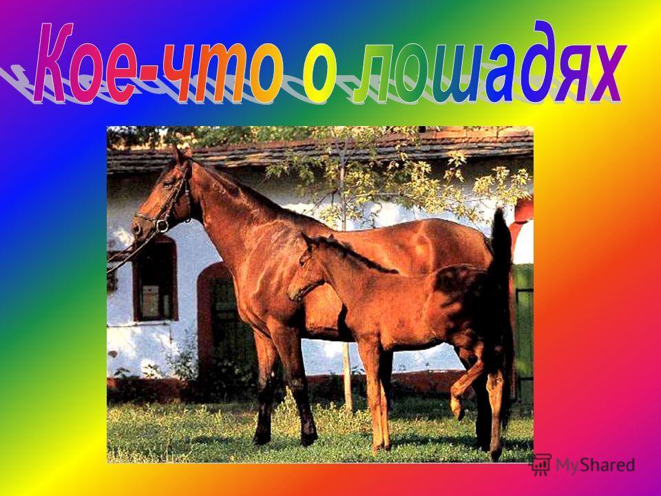 Содержание: Немного из истории Масти лошадей Азбука ухода за лошадьми Оказывается Стихи о наших питомцах По залам музея коневодства Русские тройки История маленьких лошадок Пони – тоже кони! Конный спорт Немного о себе Конец демонстрации