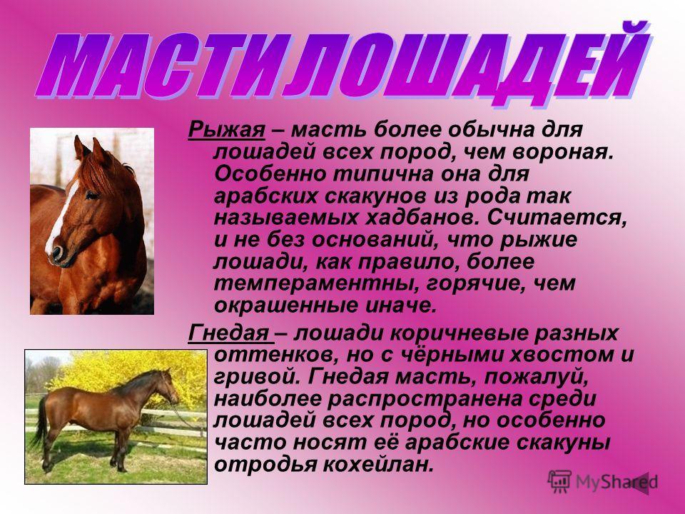 Вороная – лошадь вся чёрная. Масть довольно распространённая, встречается во многих породах. Однако особенно типична для фрисландских упряжных лошадей Голландии. У жеребцов этой породы никакие белые отметины не допускаются, лишь кобылам разрешается н
