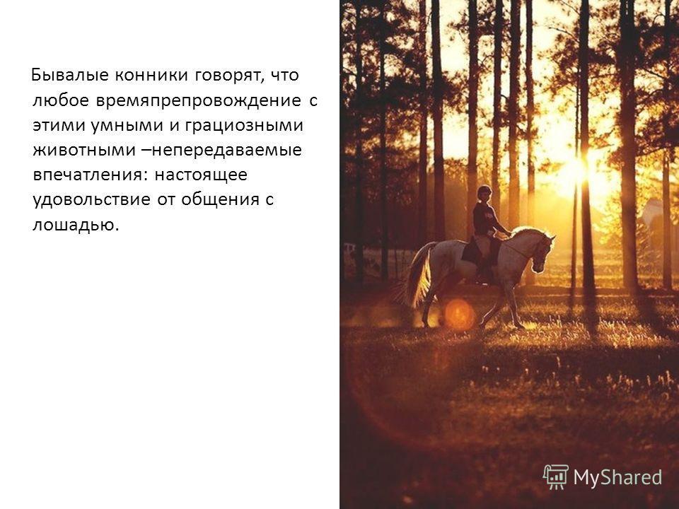 Бывалые конники говорят, что любое времяпрепровождение с этими умными и грациозными животными –непередаваемые впечатления: настоящее удовольствие от общения с лошадью.