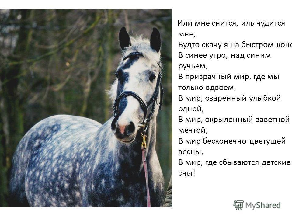 Или мне снится, иль чудится мне, Будто скачу я на быстром коне В синее утро, над синим ручьем, В призрачный мир, где мы только вдвоем, В мир, озаренный улыбкой одной, В мир, окрыленный заветной мечтой, В мир бесконечно цветущей весны, В мир, где сбыв