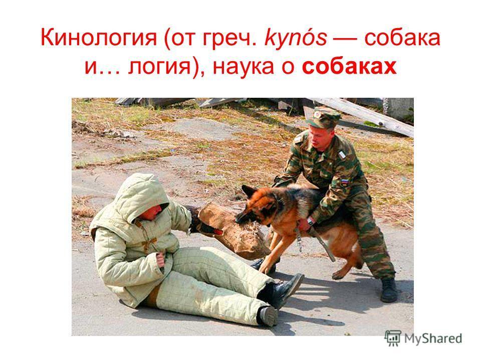Кинология (от греч. kynós собака и… логия), наука о собаках