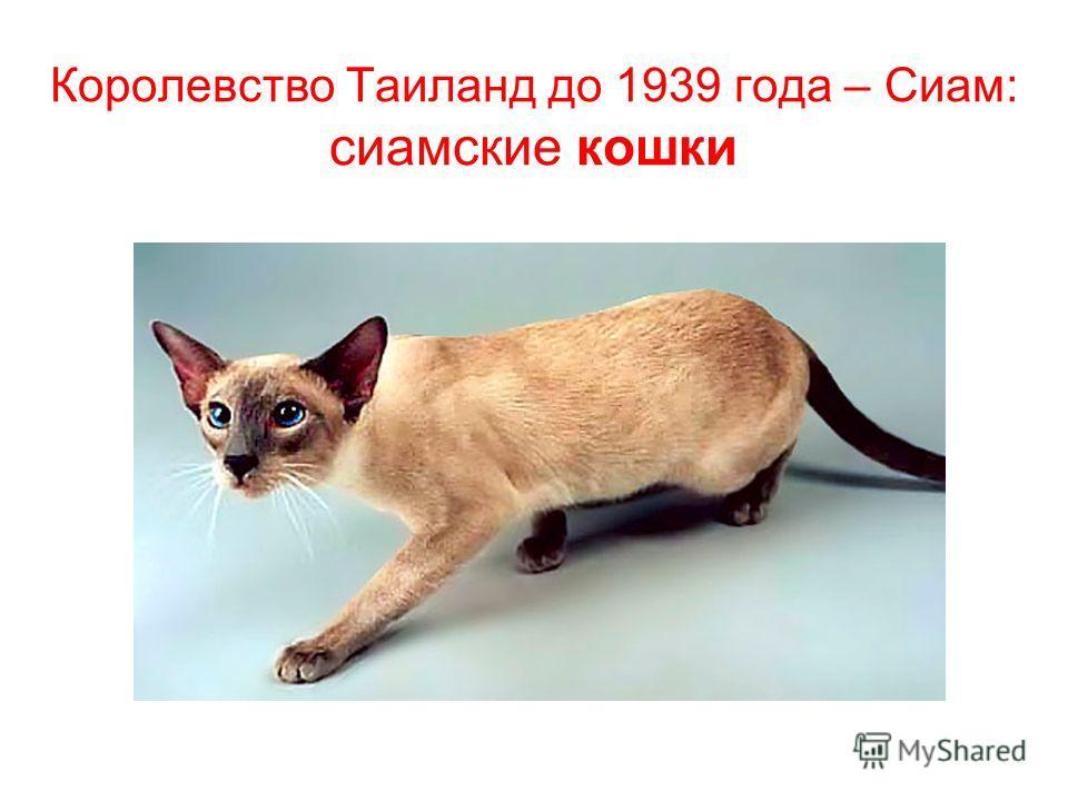 Королевство Таиланд до 1939 года – Сиам: сиамские кошки