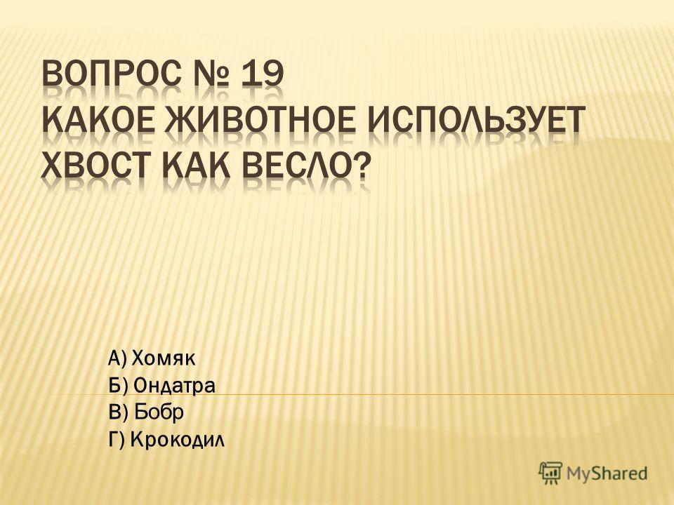 А) Хомяк Б) Ондатра В) Бобр Г) Крокодил