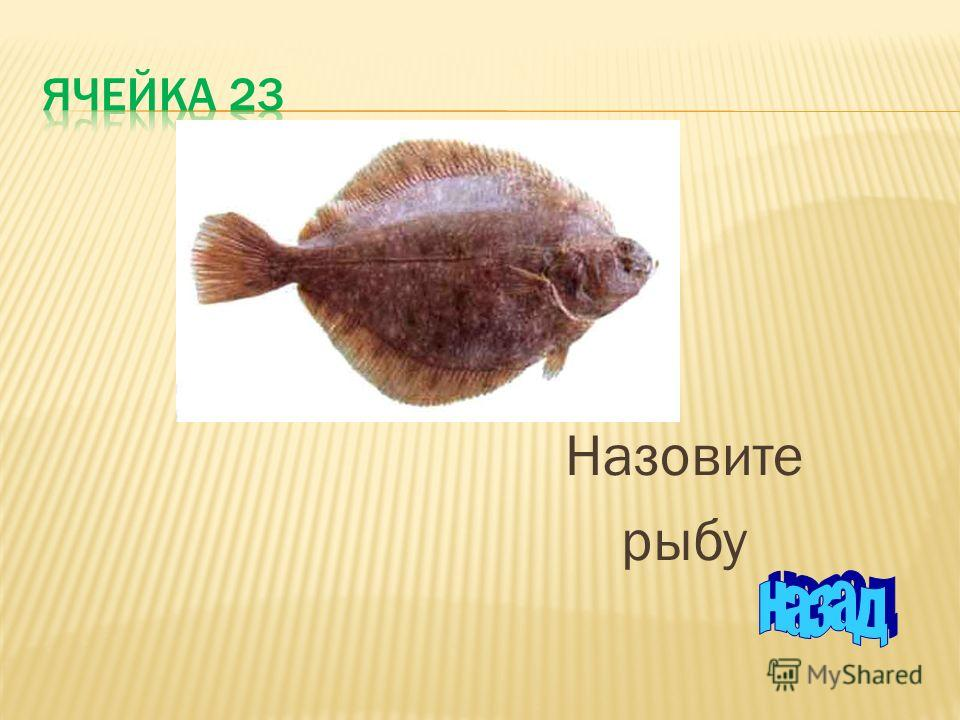 Назовите рыбу