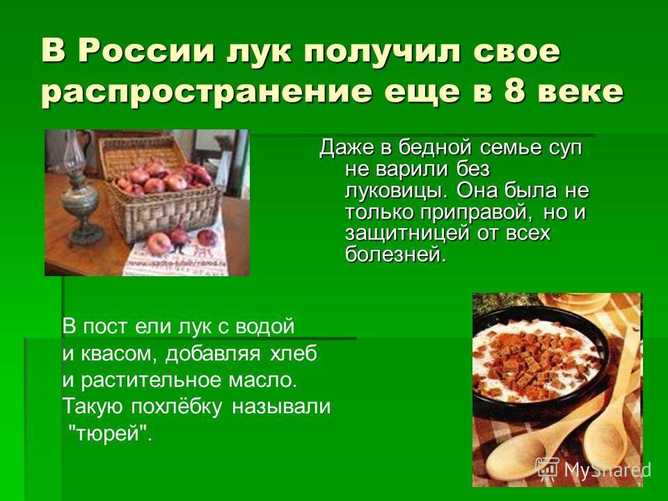 В России лук получил свое распространение еще в 8 веке Даже в бедной семье суп не варили без луковицы. Она была не только приправой, но и защитницей от всех болезней. В пост ели лук с водой и квасом, добавляя хлеб и растительное масло. Такую похлёбку