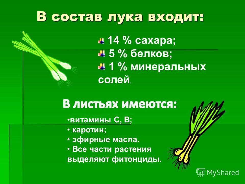 В состав лука входит: 14 % сахара; 5 % белков; 1 % минеральных солей. витамины С, В; каротин; эфирные масла. Все части растения выделяют фитонциды.