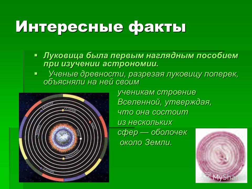 Интересные факты Луковица была первым наглядным пособием при изучении астрономии. Луковица была первым наглядным пособием при изучении астрономии. Ученые древности, разрезая луковицу поперек, объясняли на ней своим Ученые древности, разрезая луковицу