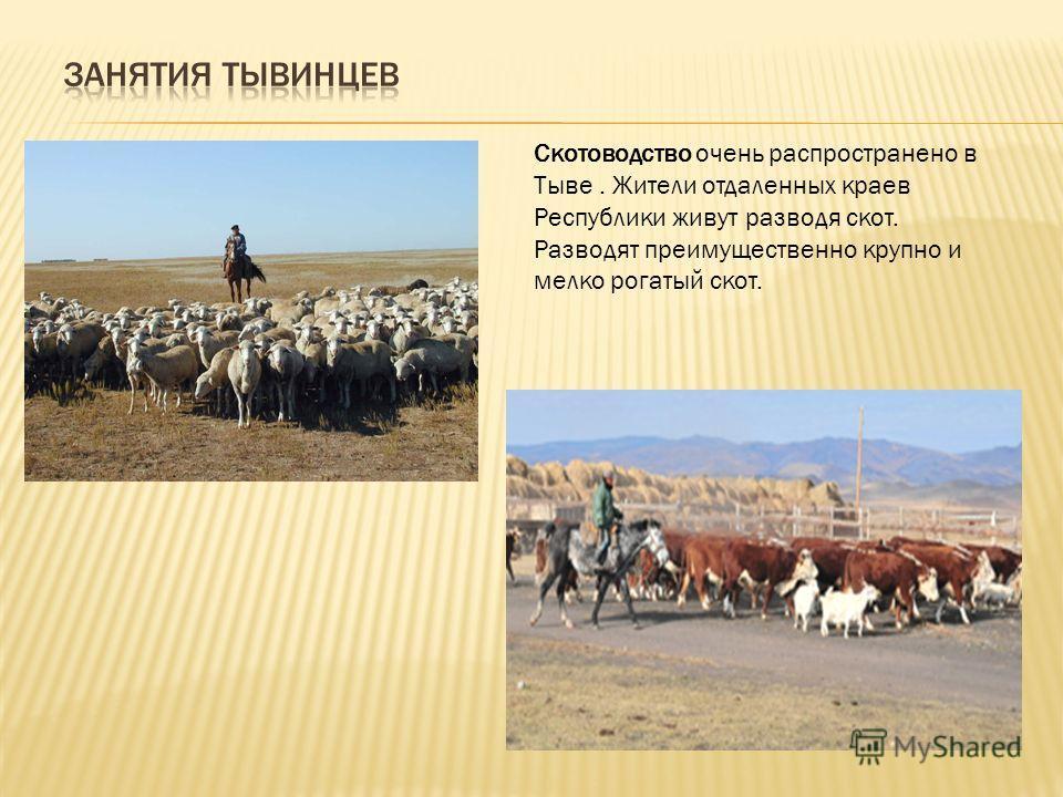 Скотоводство очень распространено в Тыве. Жители отдаленных краев Республики живyт разводя скот. Разводят преимущественно крупно и мелко рогатый скот.