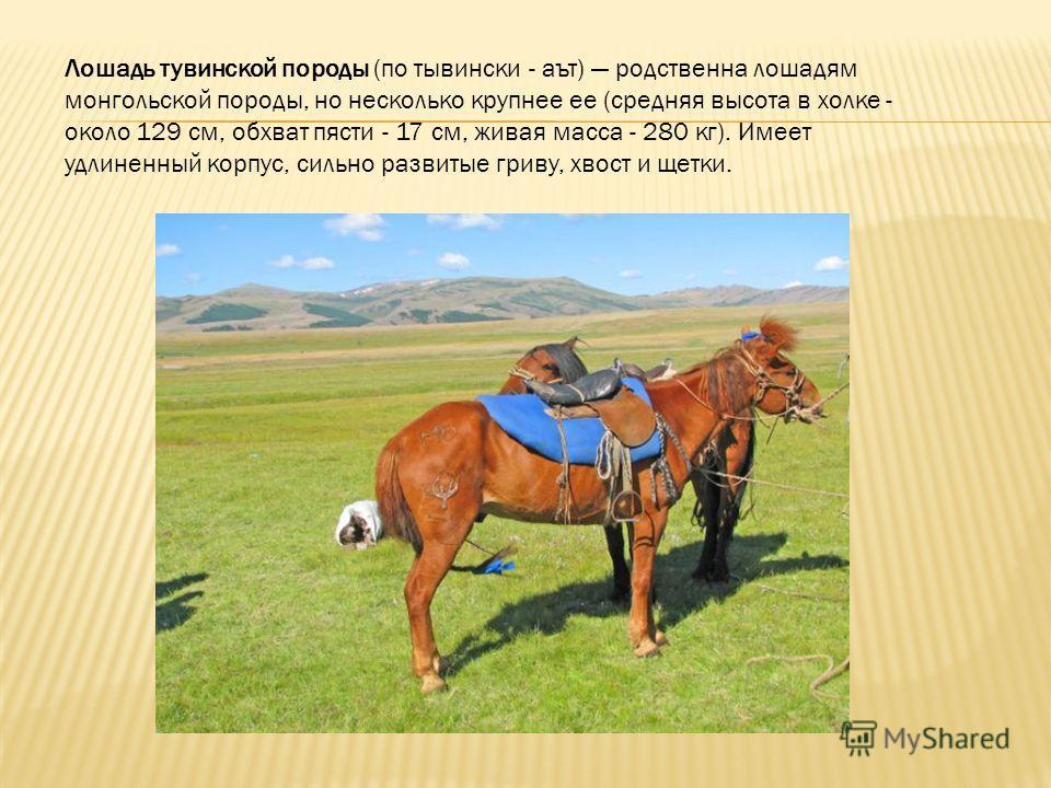 Лошадь тувинской породы (по тывински - аът) родственна лошадям монгольской породы, но несколько крупнее ее (средняя высота в холке - около 129 см, обхват пясти - 17 см, живая масса - 280 кг). Имеет удлиненный корпус, сильно развитые гриву, хвост и ще