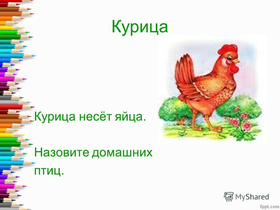 Курица Курица несёт яйца. Назовите домашних птиц.