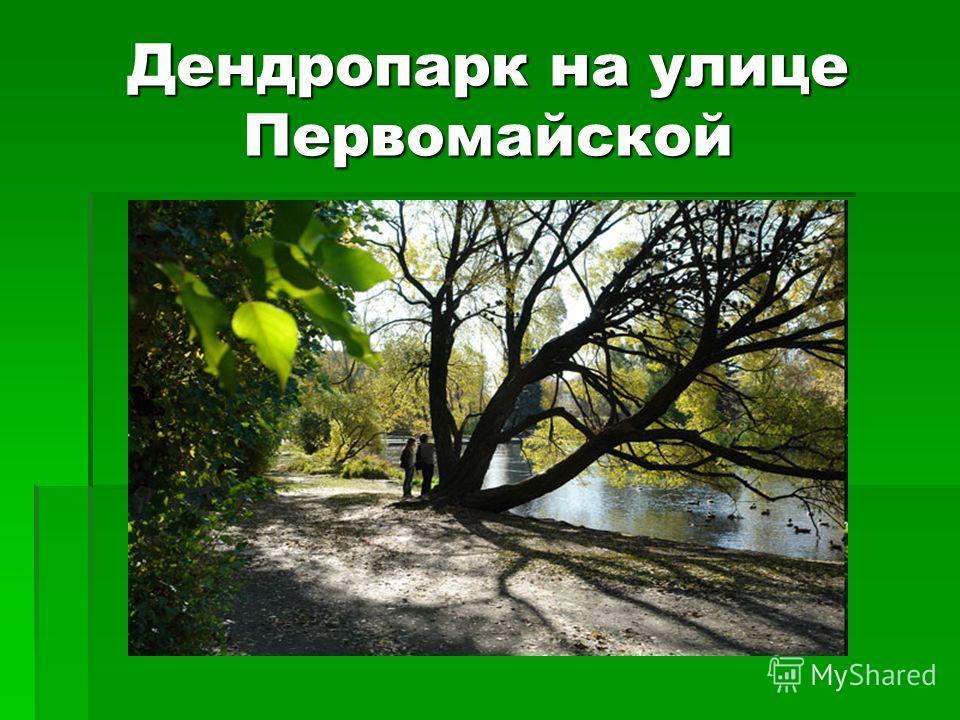 Дендропарк на улице Первомайской