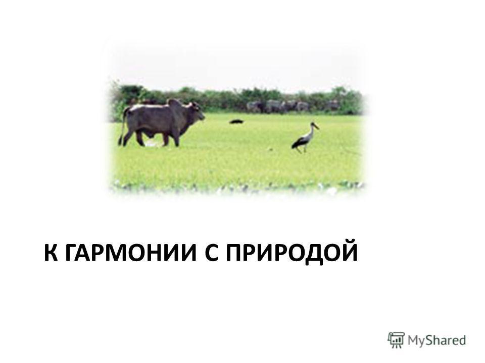 К ГАРМОНИИ С ПРИРОДОЙ