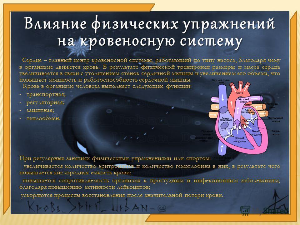 Сердце – главный центр кровеносной системы, работающий по типу насоса, благодаря чему в организме движется кровь. В результате физической тренировки размеры и масса сердца увеличивается в связи с утолщением стенок сердечной мышцы и увеличением его об