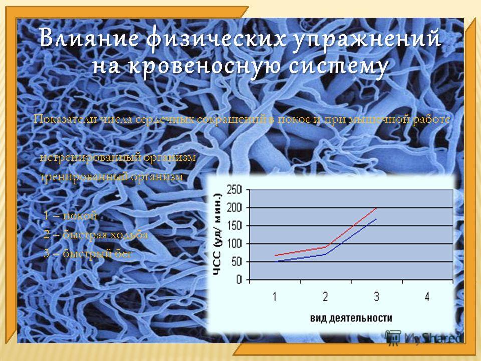 Показатели числа сердечных сокращений в покое и при мышечной работе нетренированный организм тренированный организм 1 – покой 2 – быстрая ходьба 3 – быстрый бег