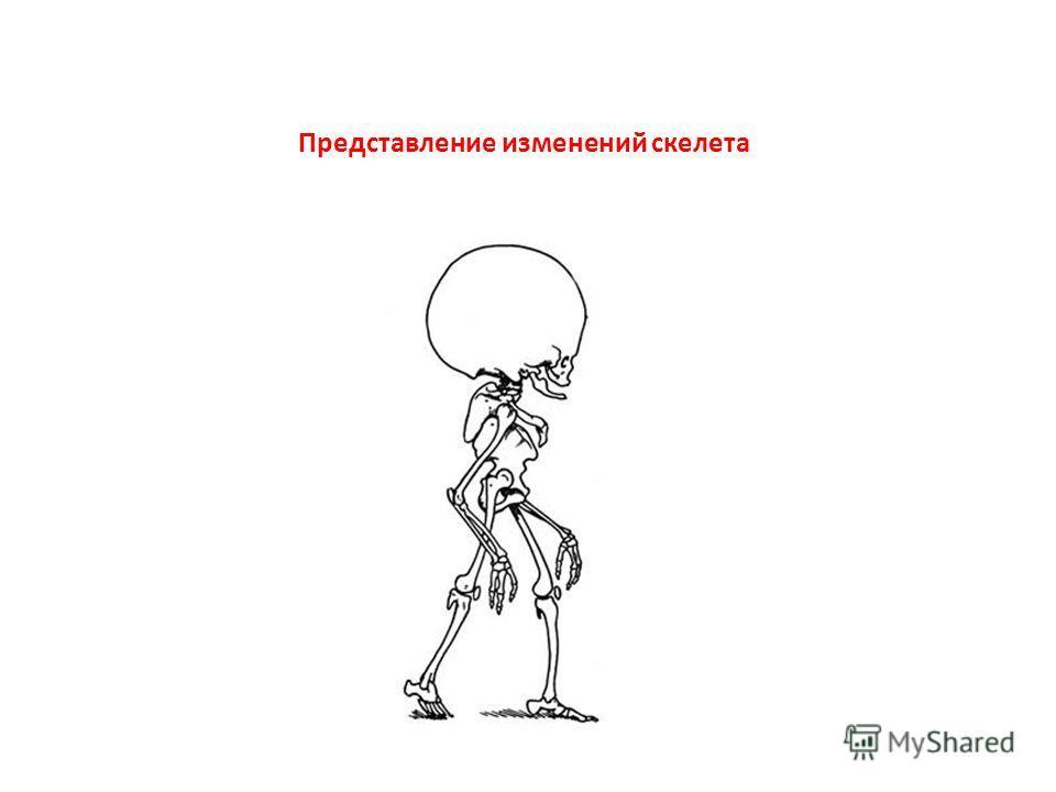 Представление изменений скелета
