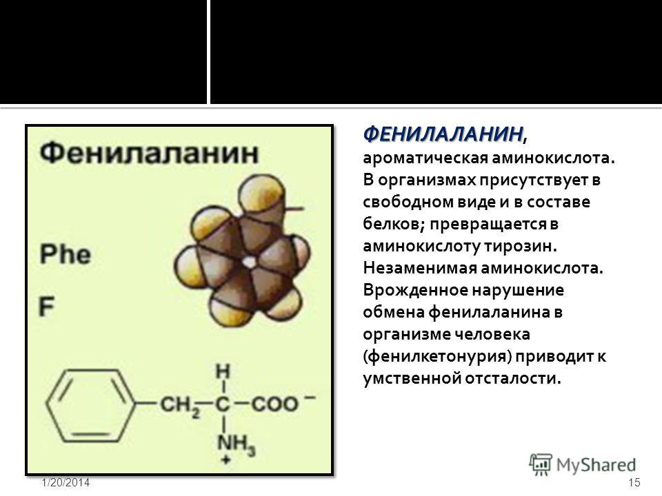 ФЕНИЛАЛАНИН ФЕНИЛАЛАНИН, ароматическая аминокислота. В организмах присутствует в свободном виде и в составе белков; превращается в аминокислоту тирозин. Незаменимая аминокислота. Врожденное нарушение обмена фенилаланина в организме человека (фенилкет
