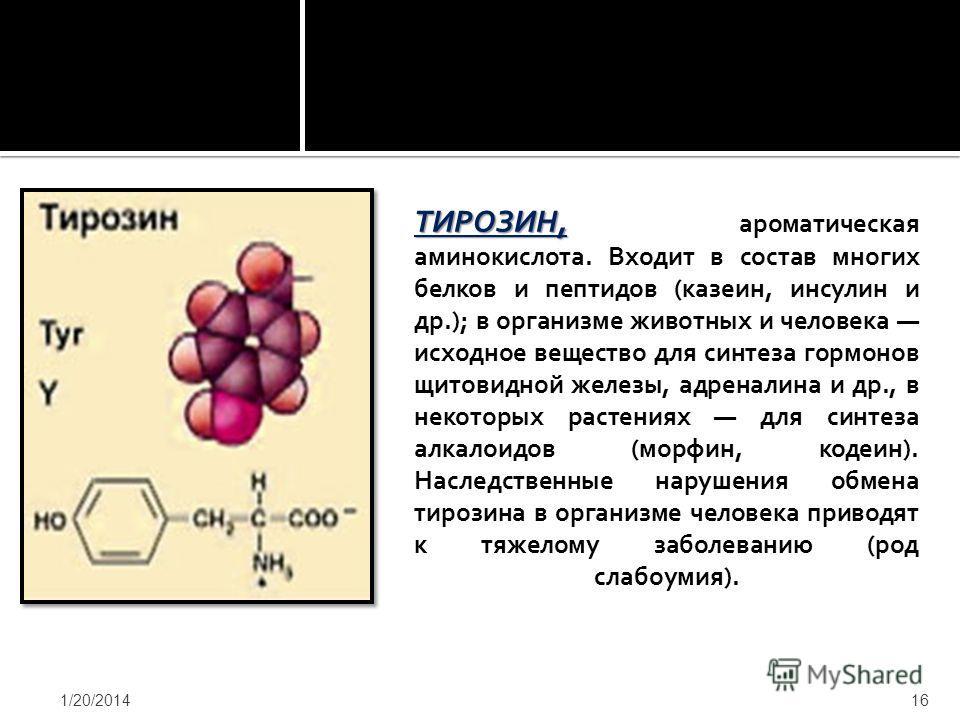 ТИРОЗИН, ТИРОЗИН, ароматическая аминокислота. Входит в состав многих белков и пептидов (казеин, инсулин и др.); в организме животных и человека исходное вещество для синтеза гормонов щитовидной железы, адреналина и др., в некоторых растениях для синт