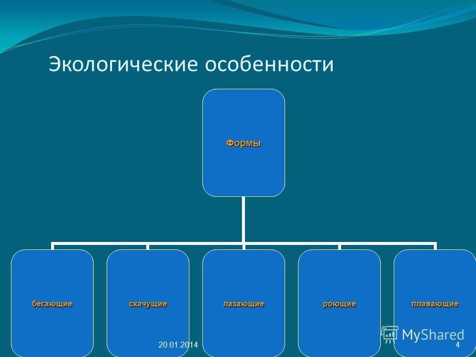 Экологические особенностиФормы бегающиескачущиелазающиероющиеплавающие 20.01.20144