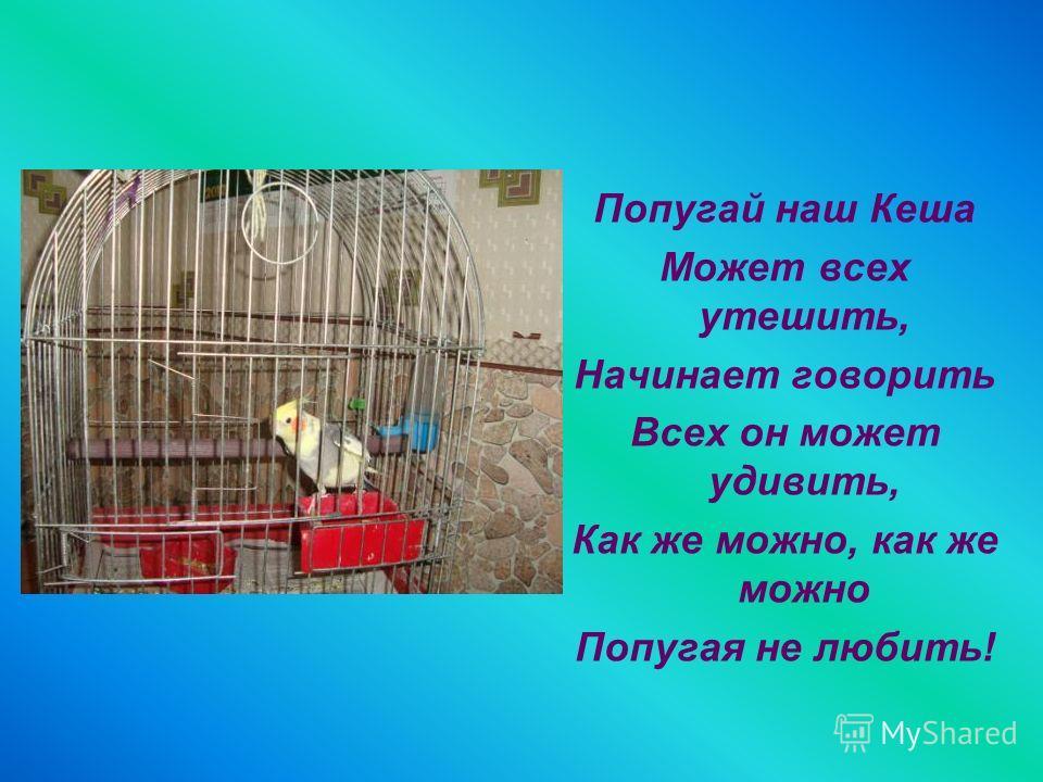 Попугай наш Кеша Может всех утешить, Начинает говорить Всех он может удивить, Как же можно, как же можно Попугая не любить!