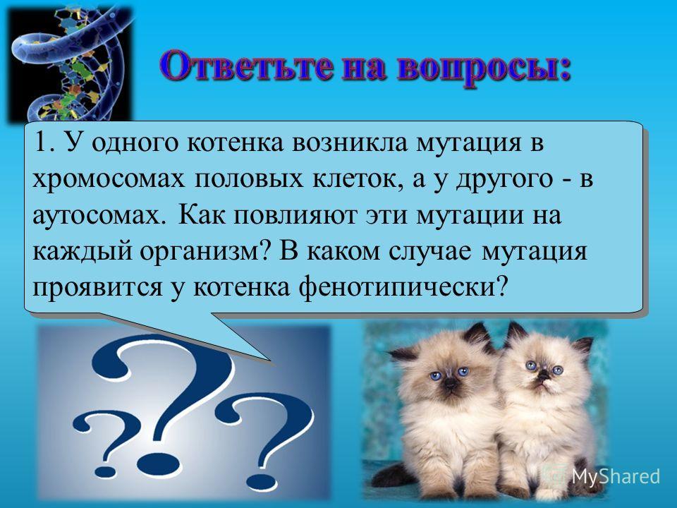 1. У одного котенка возникла мутация в хромосомах половых клеток, а у другого - в аутосомах. Как повлияют эти мутации на каждый организм? В каком случае мутация проявится у котенка фенотипически?