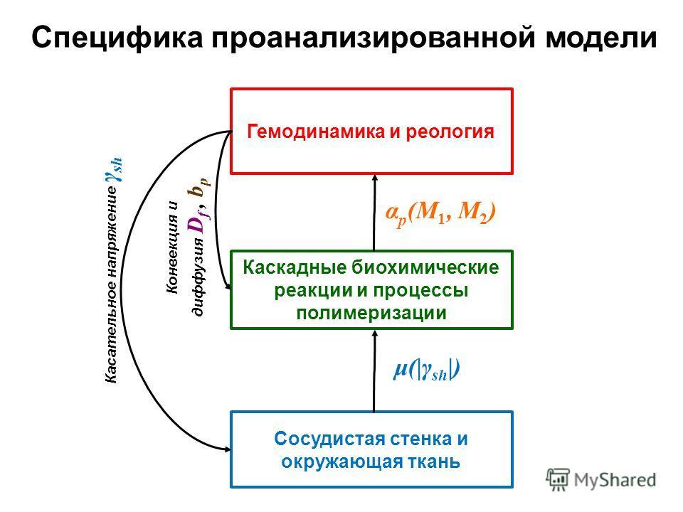 Гемодинамика и реология Каскадные биохимические реакции и процессы полимеризации Сосудистая стенка и окружающая ткань μ(|γ sh |) α p (M 1, M 2 ) Специфика проанализированной модели Касательное напряжение γ sh Конвекция и диффузия D f, b p