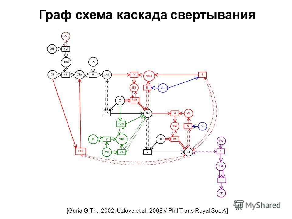 Граф схема каскада свертывания [Guria G.Th., 2002; Uzlova et al. 2008 // Phil Trans Royal Soc A]