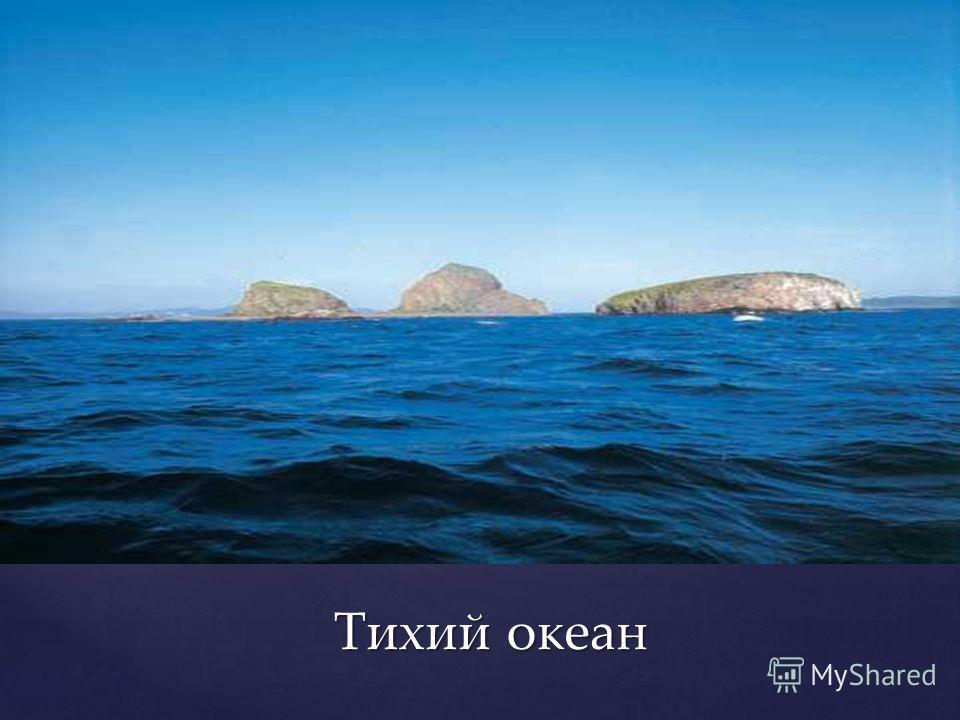 Тихий океан Тихий океан