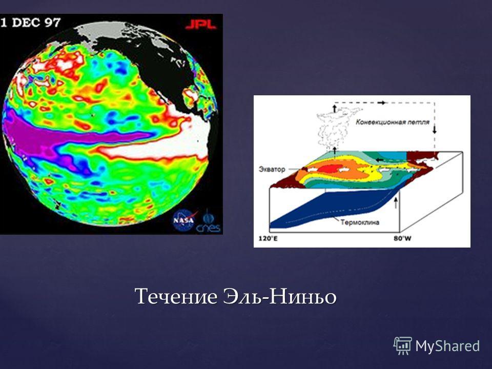 Течение Эль-Ниньо Течение Эль-Ниньо