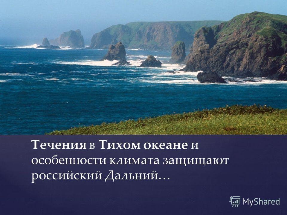 Течения в Тихом океане и особенности климата защищают российский Дальний…