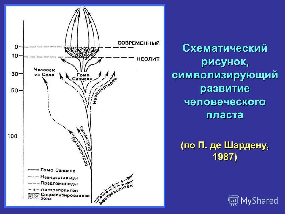 Схематический рисунок, символизирующий развитие человеческого пласта (по П. де Шардену, 1987)